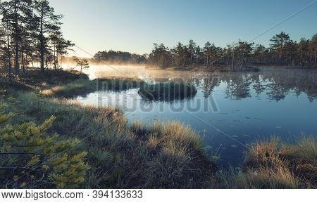 Autumn Morning In The Swamp. Natural Landscape In The Ozernoye Swamp National Park With Fog, Yellowe