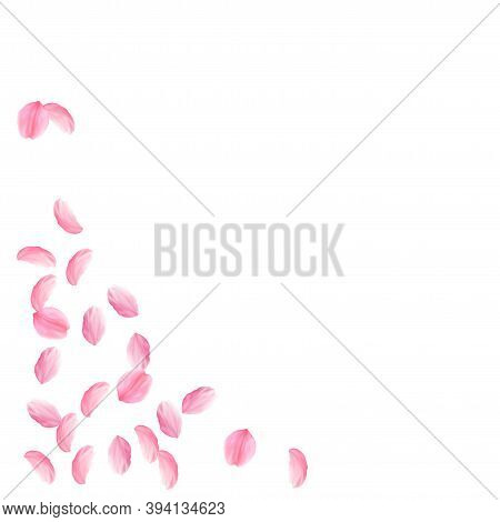Sakura Petals Falling Down. Romantic Pink Silky Medium Flowers. Sparse Flying Cherry Petals. Bottom