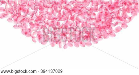 Sakura Petals Falling Down. Romantic Pink Silky Big Flowers. Thick Flying Cherry Petals. Wide Top Se
