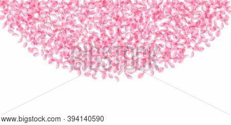 Sakura Petals Falling Down. Romantic Pink Silky Medium Flowers. Thick Flying Cherry Petals. Wide Top