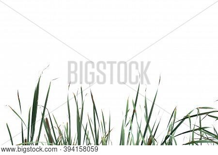 Bluured Wild Grass Leaves With Wind Blowing On White Isolated Background For Green Foliage Backdrop