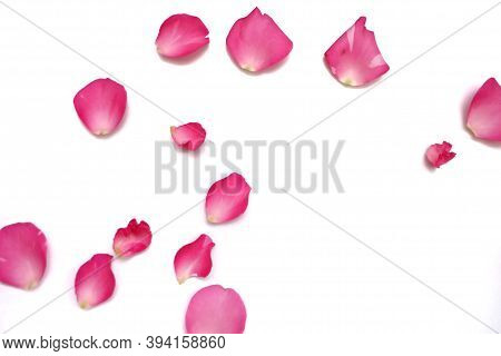 Blurred A Group Of Sweet Red Rose Corollas On White Isolated Background And Colorful Flora Details