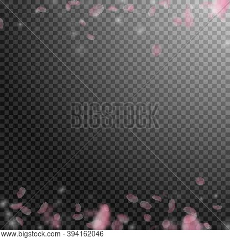 Sakura Petals Falling Down. Romantic Pink Flowers Borders. Flying Petals On Transparent Square Backg