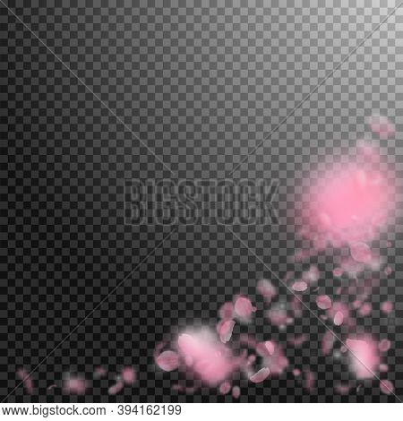 Sakura Petals Falling Down. Romantic Pink Flowers Corner. Flying Petals On Transparent Square Backgr