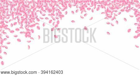 Sakura Petals Falling Down. Romantic Pink Bright Medium Flowers. Thick Flying Cherry Petals. Wide Fa