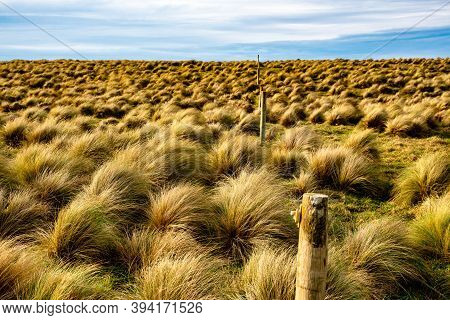 The Windswept Terrain At Slope Point, Nz's Southern Most Point, Where Only Tussock Grass Seems To Su
