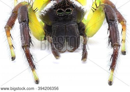 Extreme Closeup Of A Tiny Jumping Spider Showing All The Arachnid Features