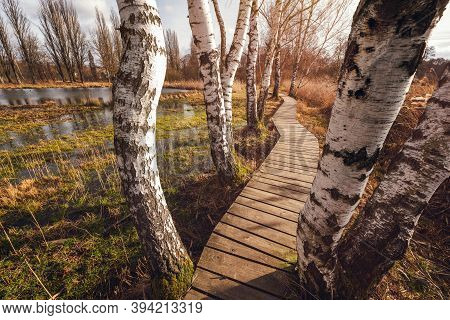 Wooden Trail Between Wetlands Near Jablonne V Podjestedi