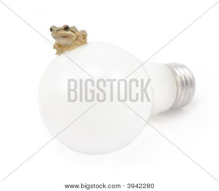 Pacific Tree Frog And Light Bulb