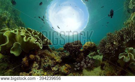 Tropical Coral Reef. Scene Reef. Marine Life Sea World. Underwater Fish Reef Marine. Philippines.