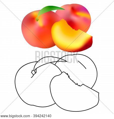 Realistic Ripe Peaches, Whole And Slice. Juicy Sweet Fruit Realistic 3d And Line Vector High Detail