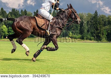 A Horse Polo Player Riding A Horse With A Hammer In His Hand Jumps Into Attack For The Ball. Summer