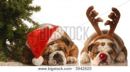 bulldog santa and bulldog under christmas tree poster
