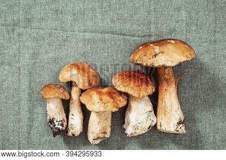 Boletus Edulis King Bolete Mushrooms On Colored Textile Background. Autumn Cep Mushrooms. Gourmet Fo