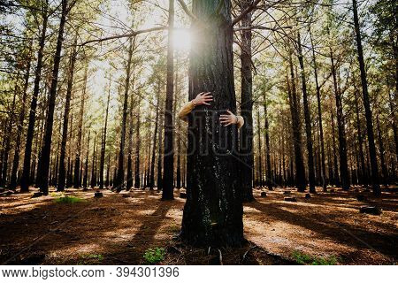 Caucasian Male Being One With Nature While Hugging Strong Tree In Luscious Woodlands