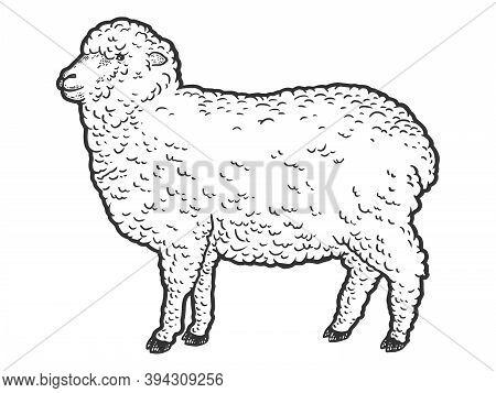 Merino Farm Animal. Engraving Raster Illustration. Sketch Scratch Board Imitation.
