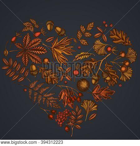 Heart Design On Dark Background With Fern, Dog Rose, Rowan, Ginkgo, Maple, Oak, Horse Chestnut, Ches