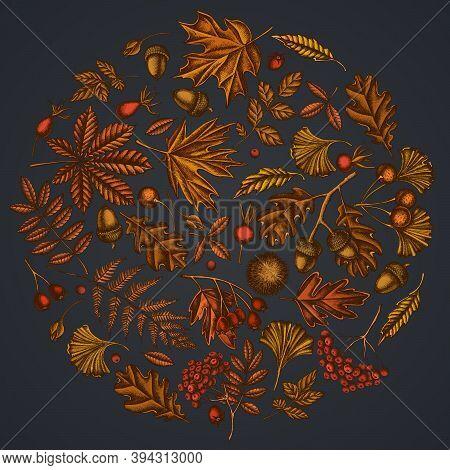Round Floral Design On Dark Background With Fern, Dog Rose, Rowan, Ginkgo, Maple, Oak, Horse Chestnu