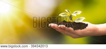 Plant Growing On Hand. Ecological Friendly And Sustainable Environment