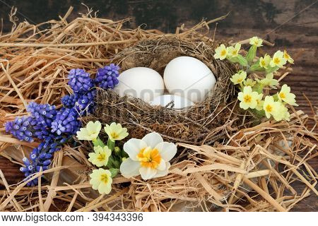 Symbol of Spring with natural bird nest, white eggs, primroses, grape hyacinths & narcissus flowers on rustic wood background. Renewal concept for Springtime.