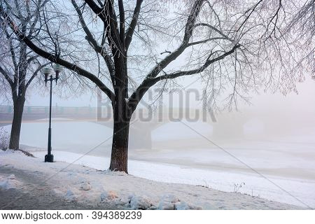 Trees On The Snow Covered Embankment. Winter Cityscape. Longest Linden Alley In Europe, Uzhgorod, Uk