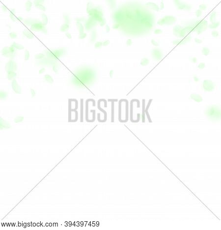 Green Flower Petals Falling Down. Interesting Romantic Flowers Falling Rain. Flying Petal On White S