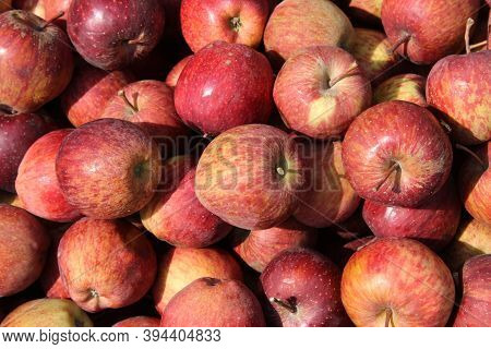 Malus Domestica, Many Red Colour Apple In The Store With Apple Background.