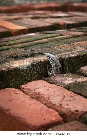 Lizard through the bricks