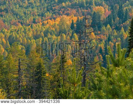 Wide Distances And Expanses Of The Mari Land. Autumn In The Mari El, Russia.