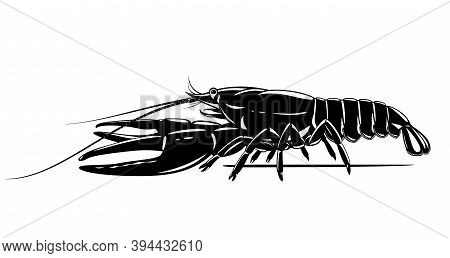 Realistic Narrow-clawed Crayfish Black And White Isolated Illustration, One Big Freshwater European