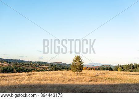 Solitary Autumn Tree In Bright Sunlight Golden Grass Hills Rural Landscape In Bulgaria
