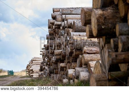 Rows Of Piled Of Logs , Waiting To Be Processed, At A Local Rural Lumber Mill, Made Into Lumber For