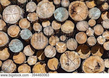 Stapled Woodpile In The German Forest As Harmonic Background