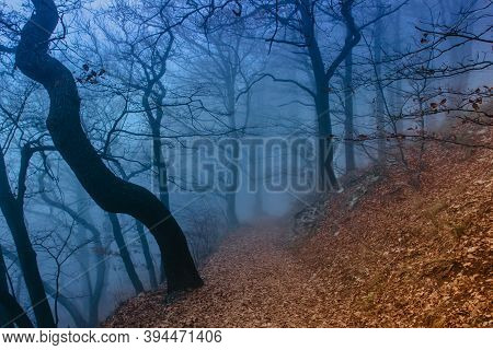 Mystical Forest In Blue Fog In Autumn.scenery With Path In Dreamy Foggy Forest.path To Adventure.dar