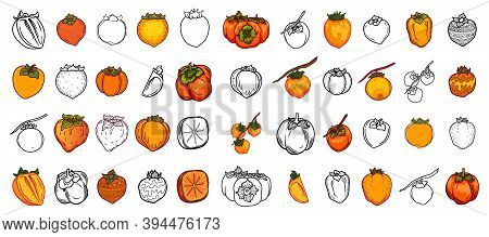 Vector Doodle Set Of Persimmon. Hand Drawn Persimmon Fruit Illustration Isolated On White Background