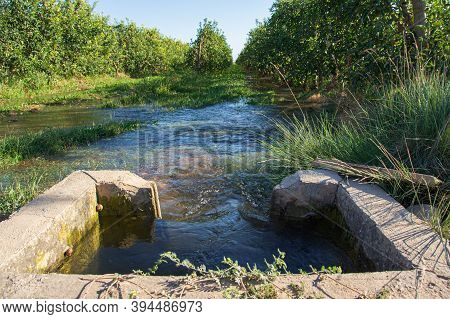 Irrigation Well That Slowly Emanates Water To Water Rows Of Fruit Trees. Flood Irrigation. Selective