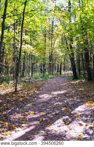 Curved Gravel Path Bending Into Forest In Autumn Season. Autumn Leaves Between Road And The Trees. S