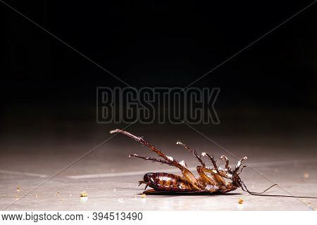 American Cockroach Dead On The Floor, Dark And Dirty Scenery. Pest Control