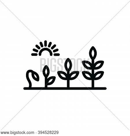 Black Line Icon For Evolution Development Growth Rise Flourish Transformation Growth Sprout Garden