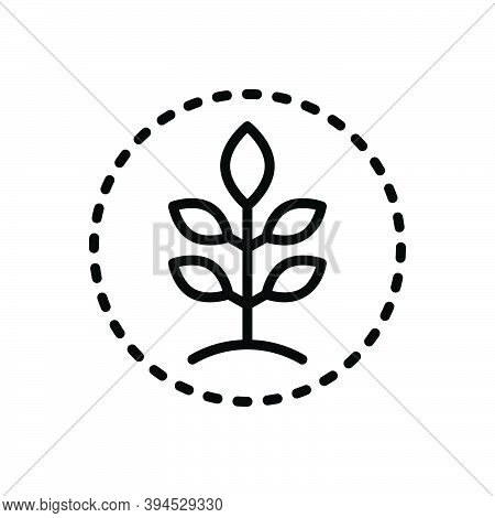 Black Line Icon For Friendly Conservation Eco-friendly Protection Fresh Green Natural Original Leaf