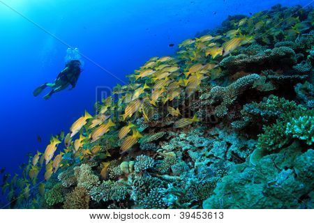 Coral reef and scuba diver