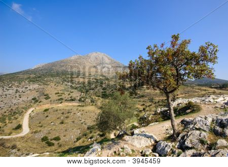 Mycenae View