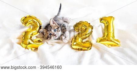 Christmas Cat 2021. Kitty With Gold Foil Balloons Number 2021 New Year. Striped Kitten On Christmas