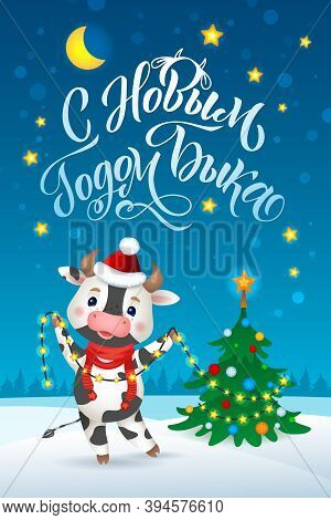 Happy New Year Cartoon Cows Character. Russian Greeting Card. Cow Celebrating The 2021. New Year Of