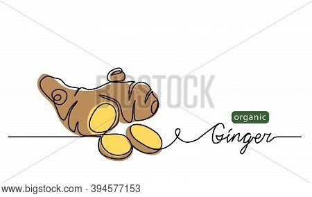 Ginger Vector Illustration. One Line Drawing Art Illustration With Lettering Organic Ginger.
