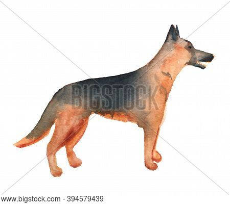 Watercolor Image Of German Shepherd Dog Isolated On White Background. Hand Drawn Catroon Illustratio