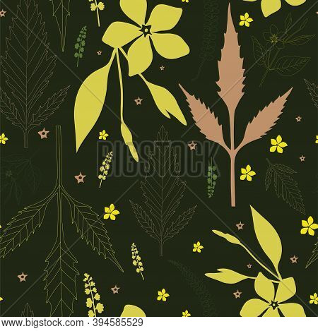 Seamless Floral Pattern Of Field Plants Of The North-western Caucasus Bidens, V. Major On A Dark Gre