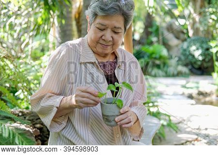 Old Asian Elderly Senior Elder Woman Checking Plant In Garden