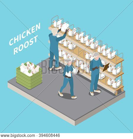Chicken Roost In Poultry Farm Blue Background With Staff Inspecting And Seating Laying Hens Isometri