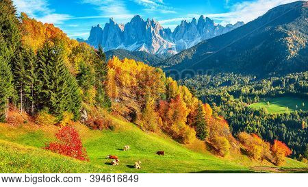 Autumn Scene Of  Santa Magdalena Famous Italy Dolomites Village View In Front Of The Geisler Or Odle
